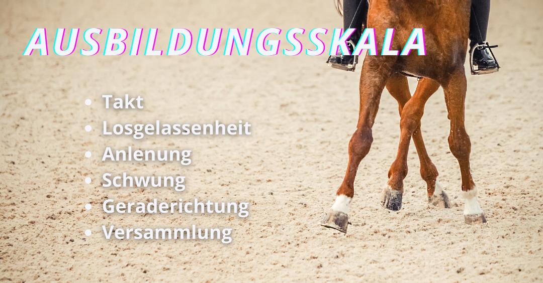 Wie lernen Pferde Dressurlektionen?